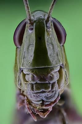Grasshopper Head Art Print by Science Photo Library