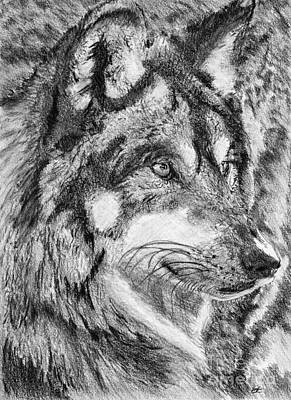 Drawing - Gray Wolf Watches And Waits by J McCombie