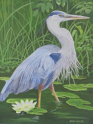 Painting - Great Blue Heron by James Lawler