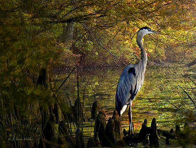Print featuring the digital art Great Blue Heron Wading by J Larry Walker