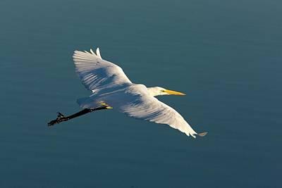 Great Egret Print by Bob Gibbons