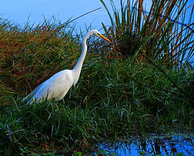 Photograph - Great Egret by Deborah Smith