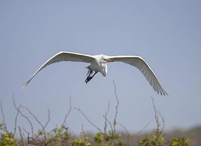 Photograph - Great Egret by Doug Lloyd