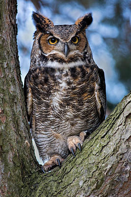 Animals Photos - Great Horned Owl by Dale Kincaid