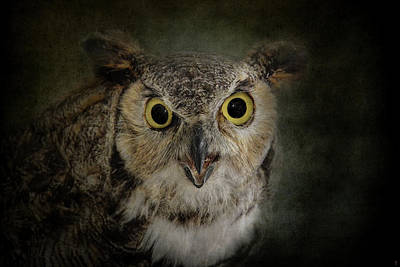 Photograph - Great Horned Owl by Jai Johnson