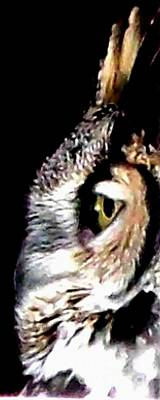 Great Horned Owl Watching You Photograph - Great Horned Owl Side View by Gail Matthews