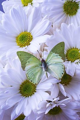 Green Butterfly  Art Print by Garry Gay