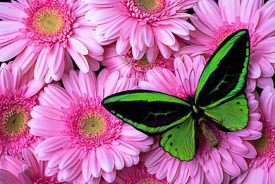 Gerbera Daisy Photograph - Green Butterfly Resting by Garry Gay
