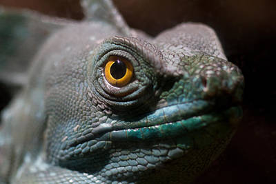 Photograph - Green Crested Basilisk  by Leah Palmer