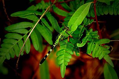 Photograph - Green Dragon 2 by David Weeks