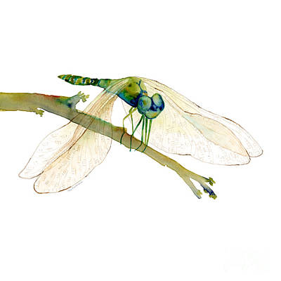 Animals Paintings - Green Dragonfly by Amy Kirkpatrick
