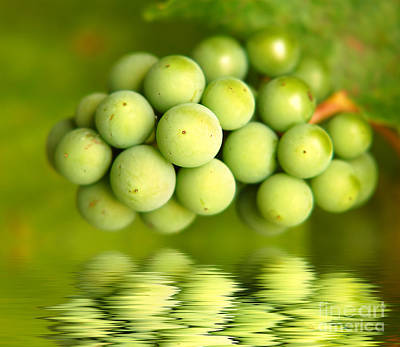 Vine Photograph - Green Grapes by Michal Bednarek