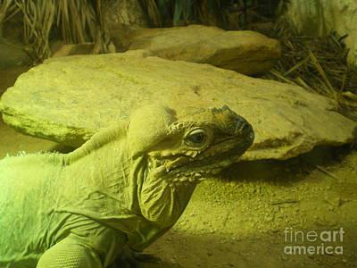 Green Iguana  Art Print by Ann Fellows