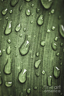 Green Leaf Abstract With Raindrops Art Print