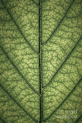 Photograph - Green Leaf Texture by Elena Elisseeva
