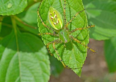 Photograph - Green Lynx Spider by John Serrao