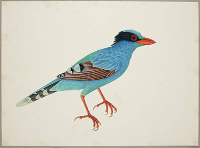 Magpies Photograph - Green Magpie by British Library