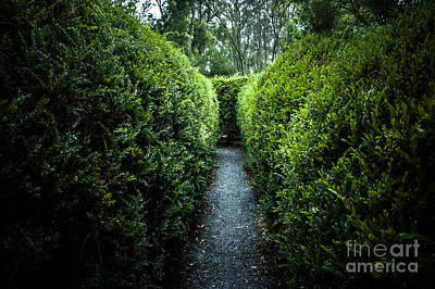 Maze Puzzle Photograph - Green Nature Photo Inside Hedge Maze by Jorgo Photography - Wall Art Gallery