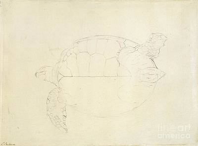 Green Sea Turtle Photograph - Green Sea Turtle, 18th Century by Natural History Museum, London