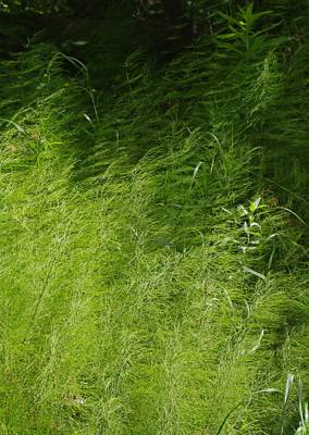 Photograph - Green by Sheila Byers