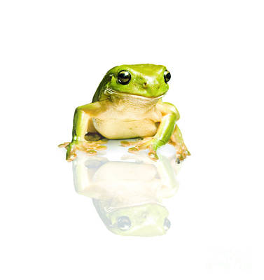 Frog Photograph - Green Tree Frog by Jorgo Photography - Wall Art Gallery