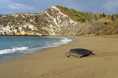 Green Sea Turtle Photograph - Green Turtle Returning To Sea by M. Watson