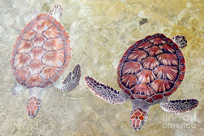 Reptiles Photograph - Green Turtles by Carey Chen