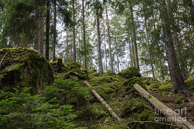 Photograph - Green Untouched Forest by Kennerth and Birgitta Kullman