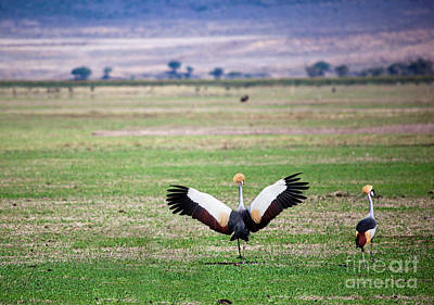 Animal Photograph - Grey Crowned Crane. The National Bird Of Uganda by Michal Bednarek