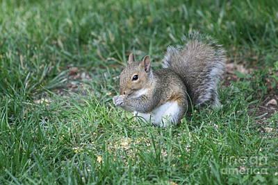 Grey Squirrel Art Print by Lori Tordsen