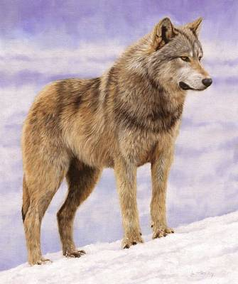 Gray Wolf Painting - Grey Wolf by David Stribbling