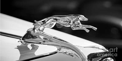 Greyhound Photograph - Greyhound Hood Ornament by Chris Dutton