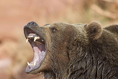 Grizzly Bear Art Print by M. Watson