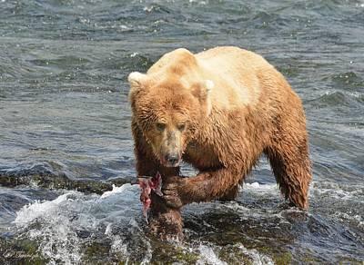 Farm Life Paintings Rob Moline Royalty Free Images - Grizzly Bear Salmon Fishing Royalty-Free Image by Patricia Twardzik