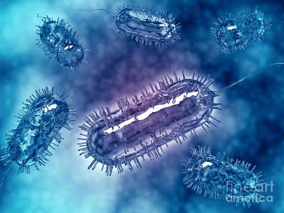 Group Of Escherichia Coli Bacteria Art Print