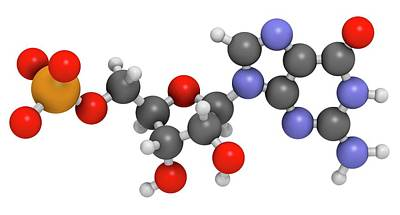Ribonucleic Acid Photograph - Guanosine Monophosphate Molecule by Molekuul