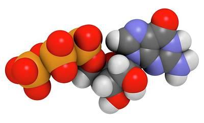 Triphosphate Photograph - Guanosine Triphosphate Molecule by Molekuul
