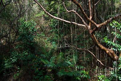 Panajachel Photograph - Guatemalan Jungle by Mark Newman
