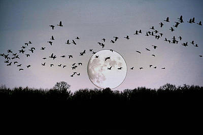 Guided By The Moon Art Print by Larry Trupp