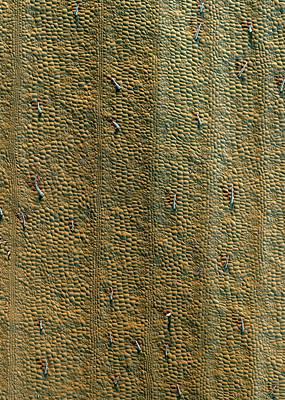 Guinea Wall Art - Photograph - Guinea Pepper Leaf Trichomes by Stefan Diller