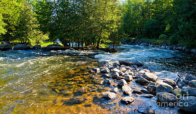 Photograph - Gull River by Les Palenik