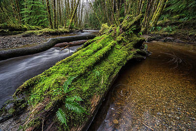 Haida Gwaii Photograph - Haans Creek Flows Through The Green by Robert Postma
