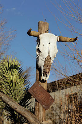 Cow Skull Photograph - Hackberry, Arizona, United States by Julien Mcroberts