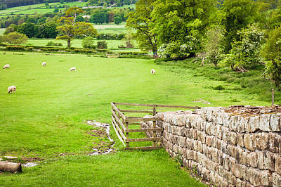 Royalty-Free and Rights-Managed Images - Hadirans Wall  by Tom Gowanlock