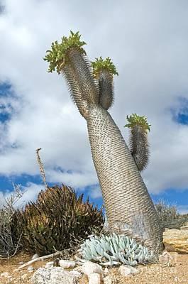 Semi Dry Photograph - Halfmens Tree by Peter Chadwick