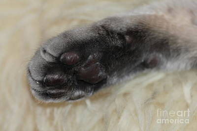 Photograph - Handsome Cat Paw by Donna L Munro