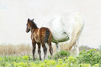 Photograph - Happy - Camargue Foal And Mum by Lisa Cockrell