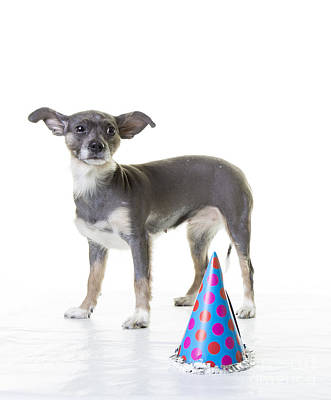 Cute Puppy Photograph - Happy Birthday by Edward Fielding