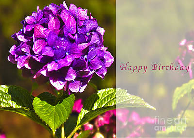 Photograph - Happy Birthday Hydrangea by Belinda Greb