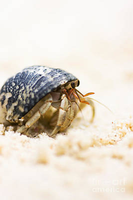 Photograph - Harry Hermit Crab by Jorgo Photography - Wall Art Gallery
